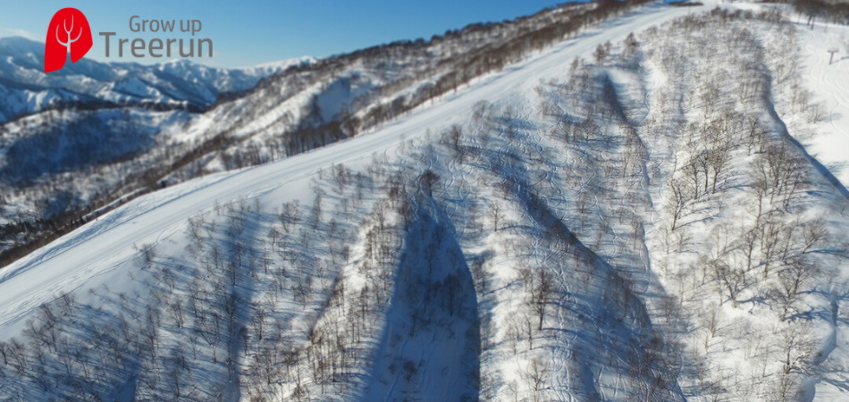 新コンセプト&更に拡大したツリーランエリア 夏油高原スキー場