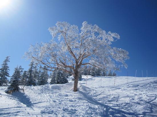 横手山・渋エリア|志賀高原 熊の湯スキー場のクチコミ画像2