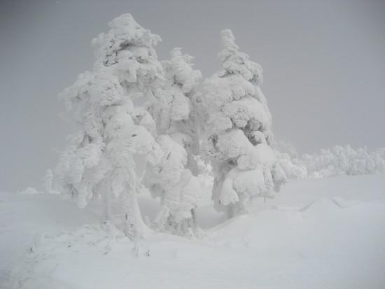 今年はまだ雪は少ないけどいい雪 阿仁スキー場のクチコミ画像2