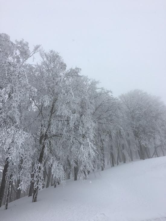 恵みの雪!!|白馬コルチナスキー場のクチコミ画像2
