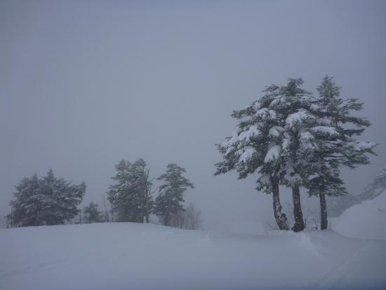 あいかわらず風が強い|川場スキー場のクチコミ画像