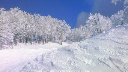 パウダーラン!!|六日町八海山スキー場のクチコミ画像