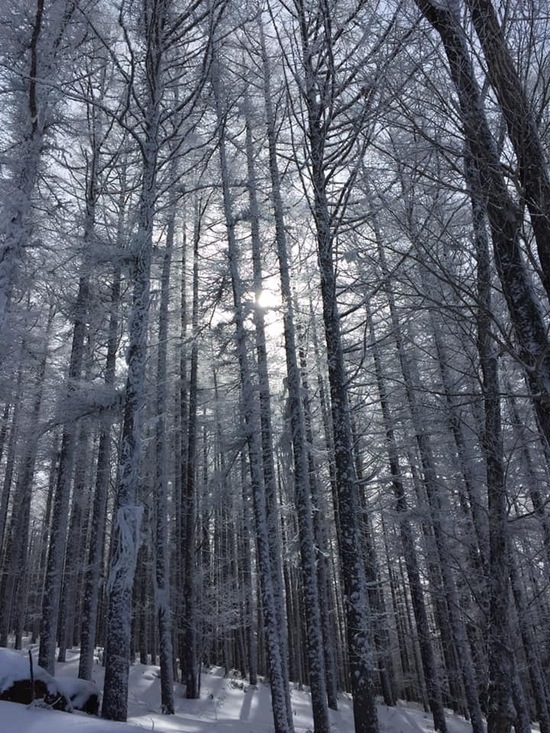 混雑|白樺高原国際スキー場のクチコミ画像3