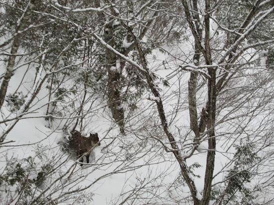 かもしかはどこだ?|白馬岩岳スノーフィールドのクチコミ画像