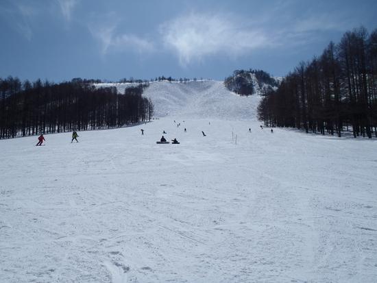 いいスキー場です|しらかば2in1スキー場のクチコミ画像