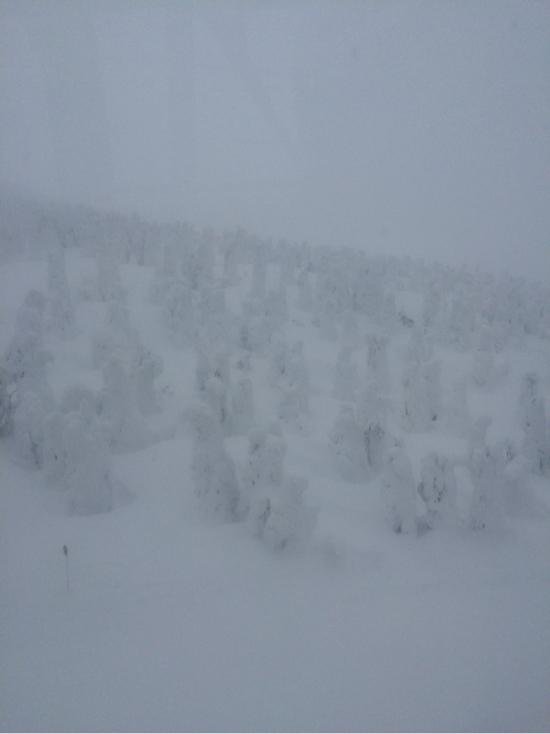 樹氷が綺麗|蔵王温泉スキー場のクチコミ画像