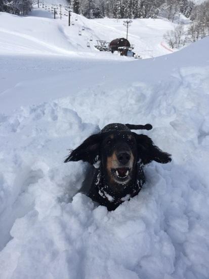 パウダー最高!|さかえ倶楽部スキー場のクチコミ画像