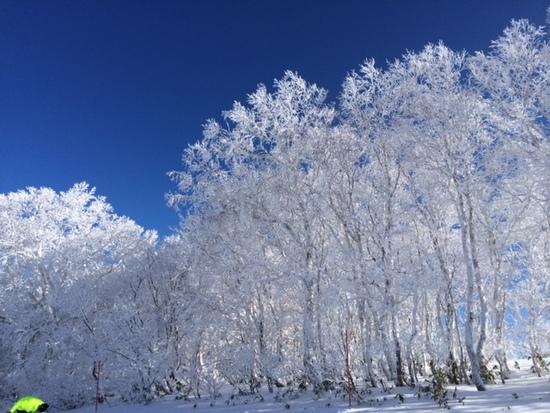 今年は雪がない・・・|函館七飯スノーパークのクチコミ画像1