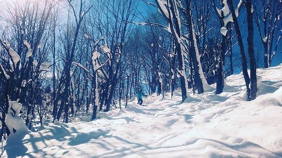 快晴|飛騨ほおのき平スキー場のクチコミ画像3