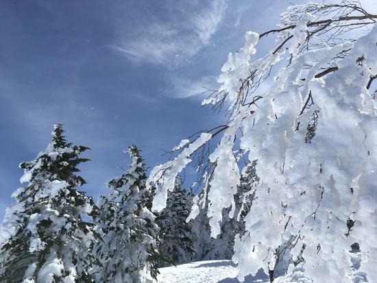 ゲレンデから簡単アクセス別世界へ|菅平高原スノーリゾートのクチコミ画像1
