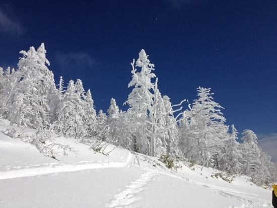 雪質が最高!|グランデコスノーリゾートのクチコミ画像