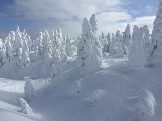 スノーモンスター成長中!|蔵王温泉スキー場のクチコミ画像