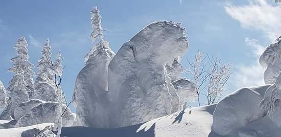 雪質、斜度、コース幅、樹氷最高でした。|蔵王ライザワールドのクチコミ画像1