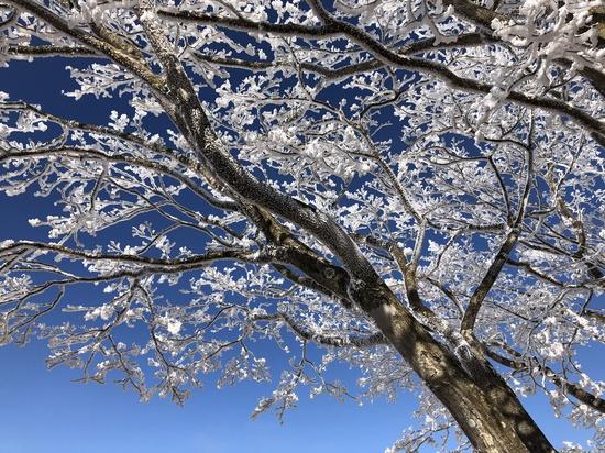 高齢者のスキー|軽井沢プリンスホテルスキー場のクチコミ画像3