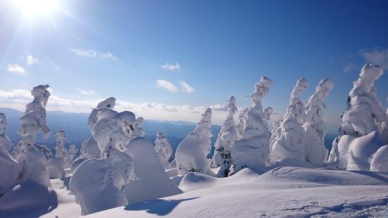 樹氷がキレイ!秋田犬の北斗くん! 阿仁スキー場のクチコミ画像3