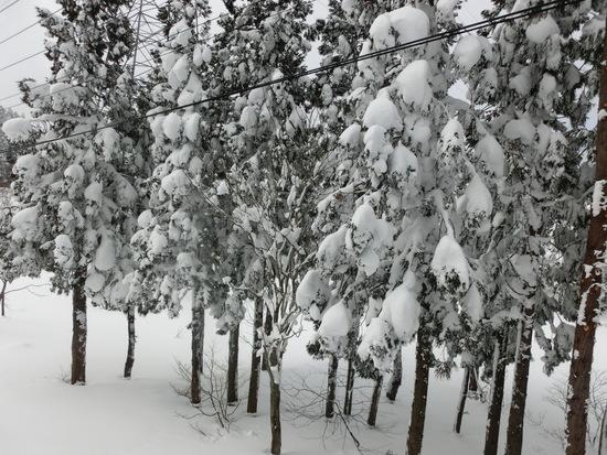 キラキラした雪がたっぷり|上越国際スキー場のクチコミ画像