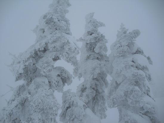 樹氷がきれいでした。|阿仁スキー場のクチコミ画像