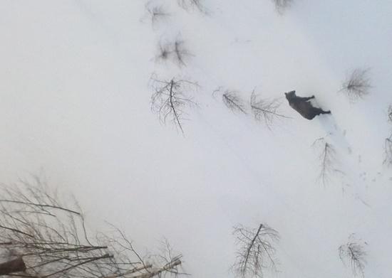 久しぶりの|苗場スキー場のクチコミ画像
