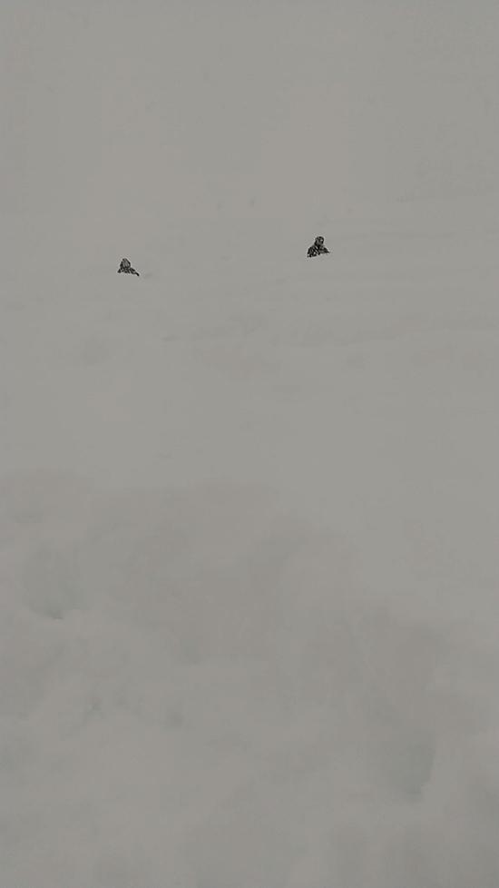新雪に埋まる 上越国際スキー場のクチコミ画像