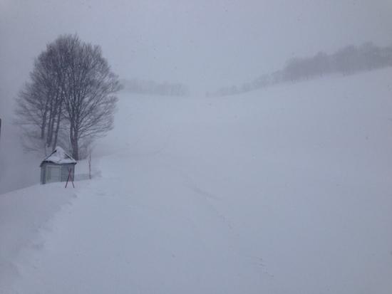 非圧雪パウダー|ホワイトバレースキー場のクチコミ画像