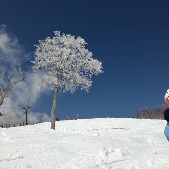 春なのに霧氷|かぐらスキー場のクチコミ画像