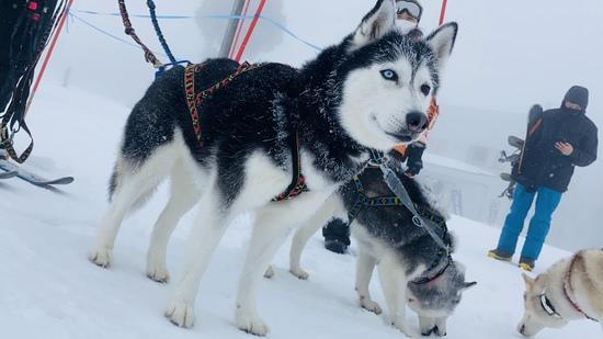 一面の雪景色!|野沢温泉スキー場のクチコミ画像3