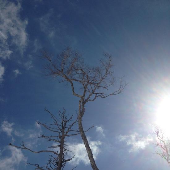 空いていました|信州松本 野麦峠スキー場のクチコミ画像