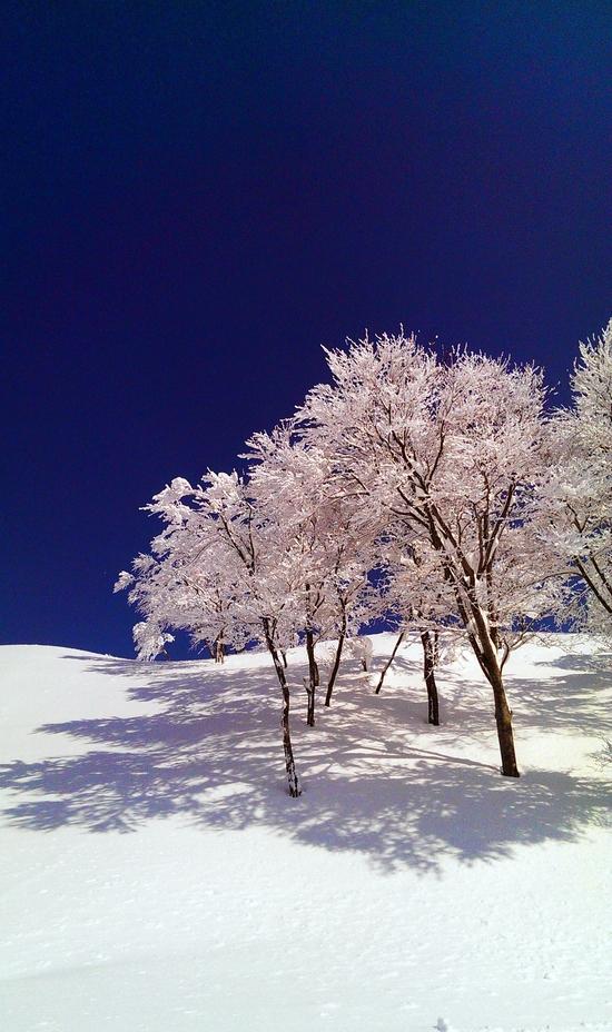 快晴!|六日町八海山スキー場のクチコミ画像