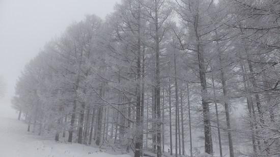 全面圧雪で残念スキー エコーバレースキー場のクチコミ画像