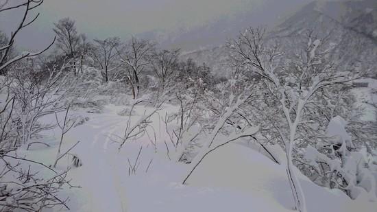 流石の豪雪もまだまだ シャルマン火打スキー場のクチコミ画像3