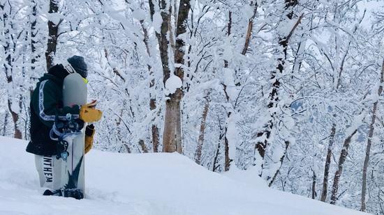 さらさらパウダー|朝里川温泉スキー場のクチコミ画像