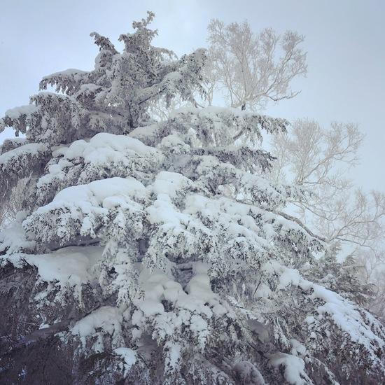 もけもけ雪❄️|志賀高原リゾート中央エリア(サンバレー〜一の瀬)のクチコミ画像