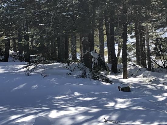リフト沿いにパンダ|丸沼高原スキー場のクチコミ画像