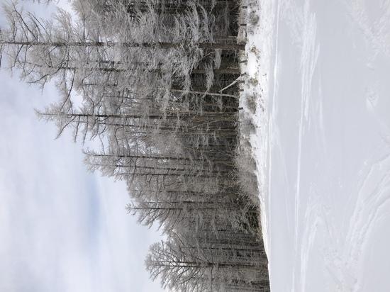 雪質が良い 湯の丸スキー場のクチコミ画像2