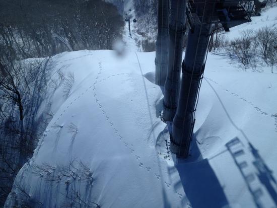 動物も楽しむスキー場|苗場スキー場のクチコミ画像
