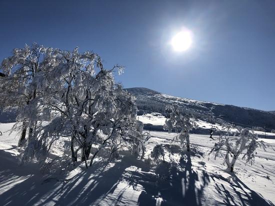 快晴|箕輪スキー場のクチコミ画像
