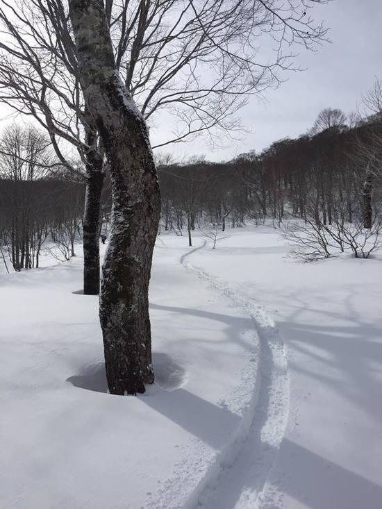 田代ゲレンデ|かぐらスキー場のクチコミ画像
