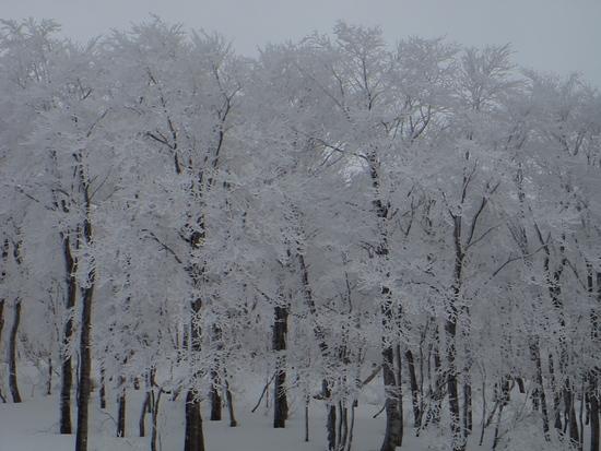 樹氷の美しさ|スキージャム勝山のクチコミ画像2