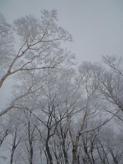 樹氷の美しさ|スキージャム勝山のクチコミ画像3