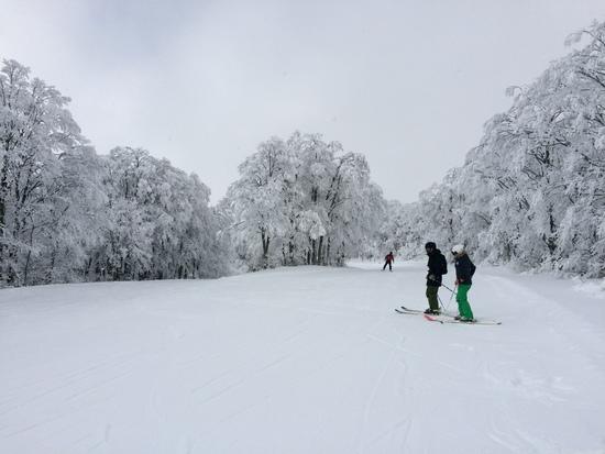 雪降れー|星野リゾート アルツ磐梯のクチコミ画像