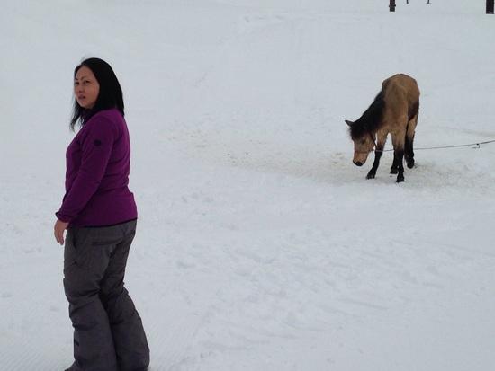 馬|ニュー・グリーンピア津南スキー場のクチコミ画像