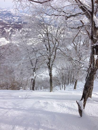 ツリーラン|斑尾高原スキー場のクチコミ画像2