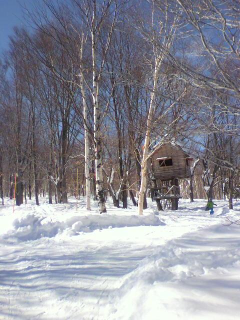 ツリーハウス&ツリーラン 奥志賀|奥志賀高原スキー場のクチコミ画像