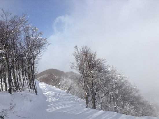 ツリーランが最高!|斑尾高原スキー場のクチコミ画像