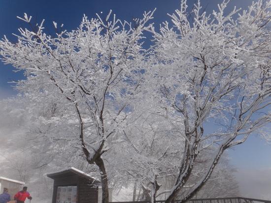 降雪明けの軽井沢でなかなかGOOD|軽井沢プリンスホテルスキー場のクチコミ画像