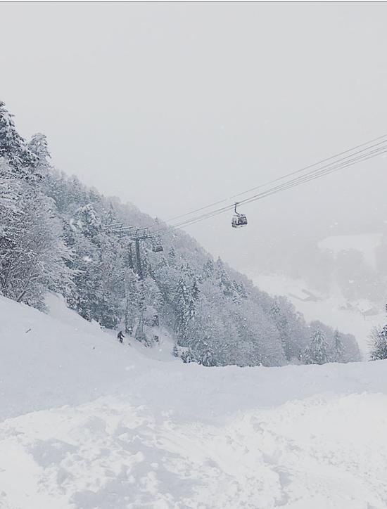 Snowy Monday|丸沼高原スキー場のクチコミ画像
