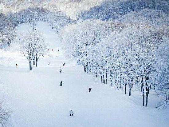 ゲレ食がおいしいだけじゃない!!ゲレンデも最高に楽しい!!|上越国際スキー場のクチコミ画像