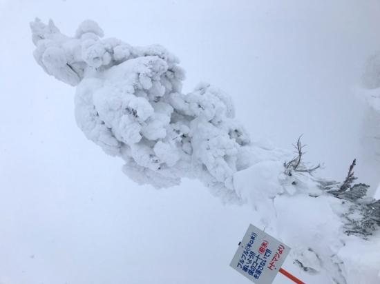 パウダー最高|阿仁スキー場のクチコミ画像