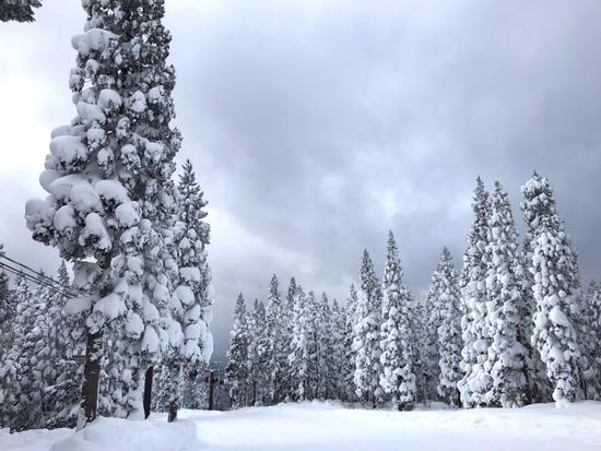 パウダー最高 阿仁スキー場のクチコミ画像2