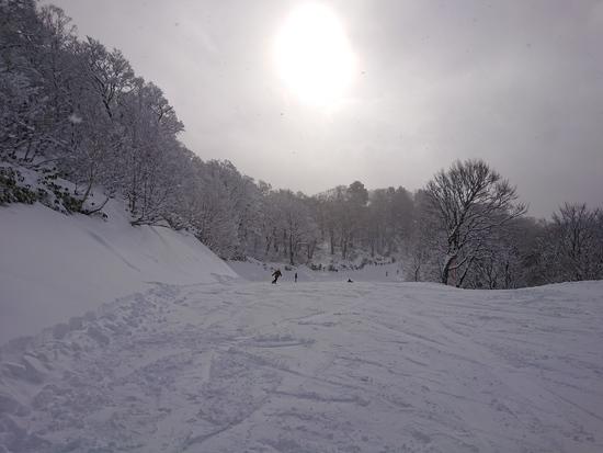 やっぱり天然雪|たんばらスキーパークのクチコミ画像